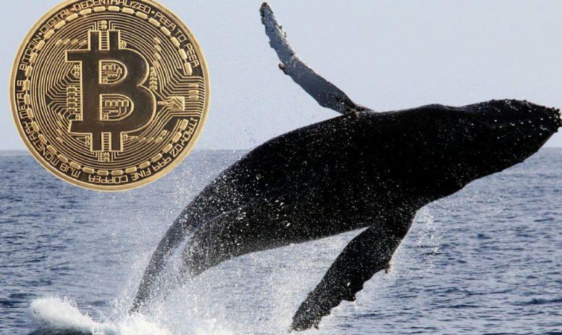 انتقال بیت کوین (BTC) به ارزش 100 میلیون دلار به صرافی ها توسط نهنگ ها