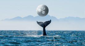 جابجایی هایی غول آسا در ریپل، 544 میلیون ریپل (XRP) توسط نهنگ ها جابجا شدند