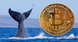 یک نهنگ ناشناس بیش از 7 هزار بیت کوین را به کیف پولی ناشناس منتقل کرد!