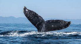 به گزارش سانتیمنت، نهنگ ها در حال جمع آوری برخی از آلت کوین ها هستند