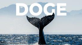 با خروج میلیاردها دلار سرمایه، نهنگ های دوج کوین خسته به نظر می رسند