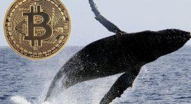 سومین نهنگ بزرگ بازار، دارایی های خود را افزایش داد