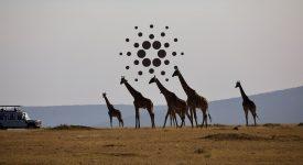 تور کاردانو در افریقا آغاز شد
