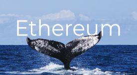 جابجایی هنگفت میلیون ها دلار اتریوم توسط نهنگ ها