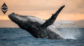سنتیمنت: اتریوم های نهنگ ها به بالاترین سطح خود رسیده است
